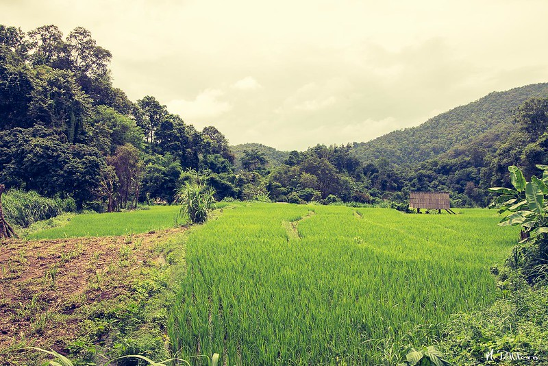 Paisaje Chiang Mai