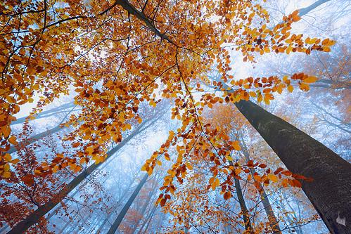 the canopy por Sandra Bartocha
