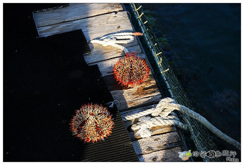 2013元貝休閒漁業_100