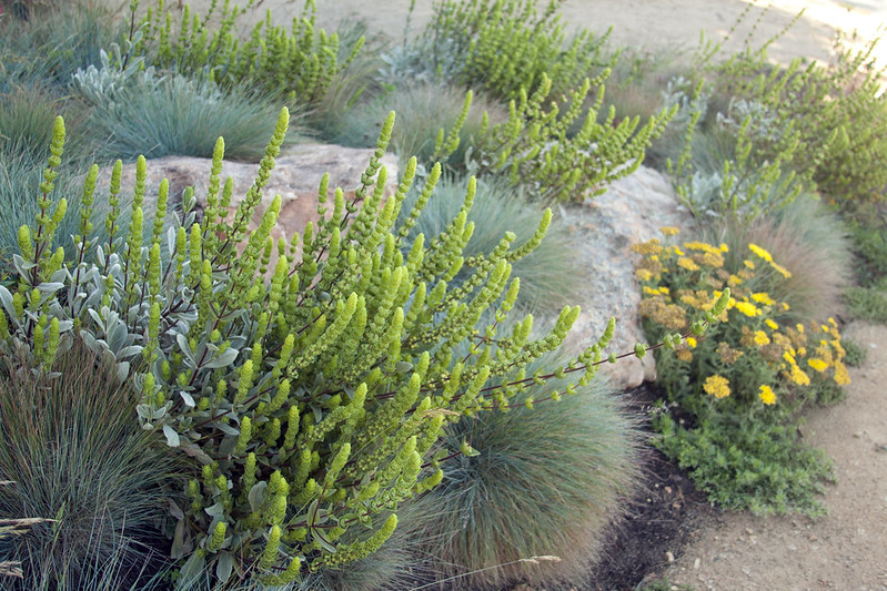 SFBG medit plants1