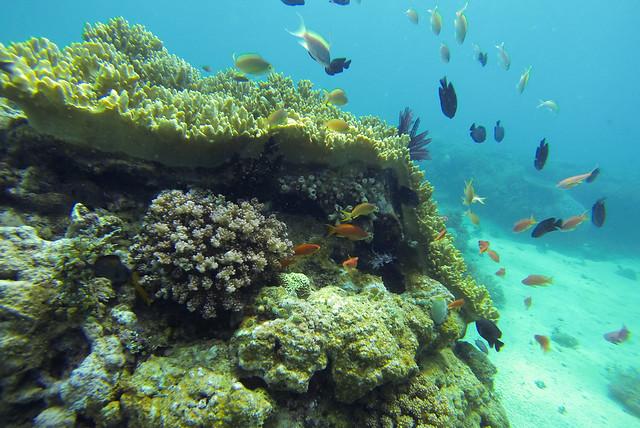 Puerto Galera Underwater