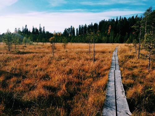 wood suomi finland woods swamp suo