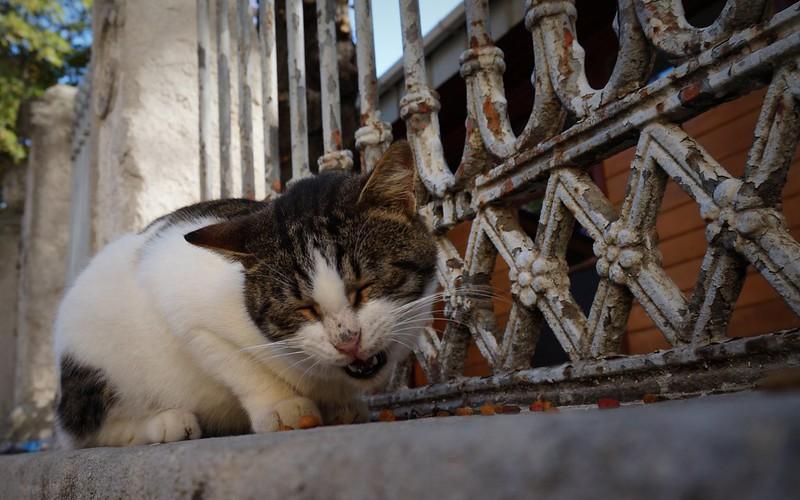 Stray-Cats-Istanbul-(16)