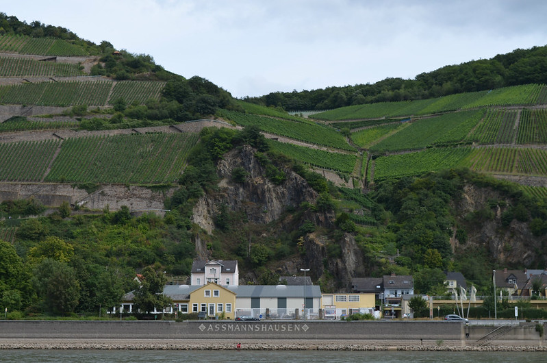 Rheingau Romantik Tour_Assmanshausen from the water