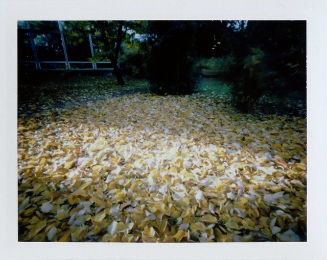 Fall leaves - Pinhole