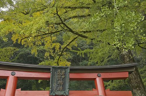 【写真】紅葉 : 岩戸落葉神社