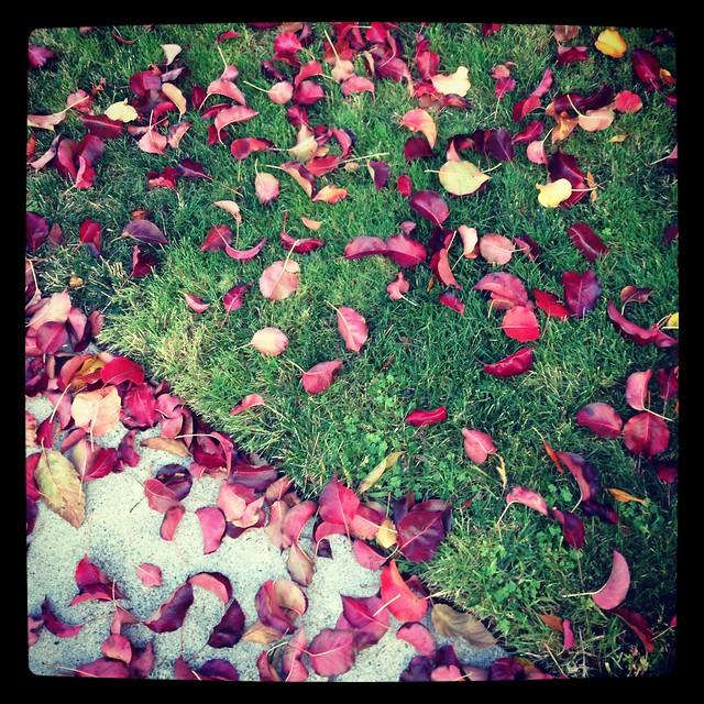 Fall's Petals