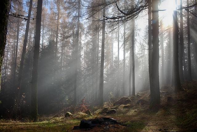 Nebbia autunnale
