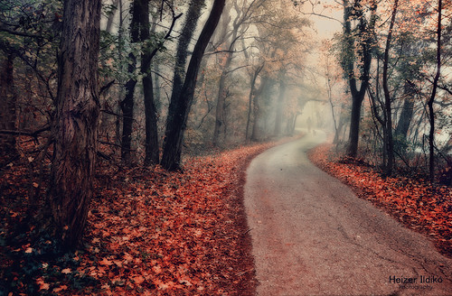 road autumn trees nature leaves fog forest