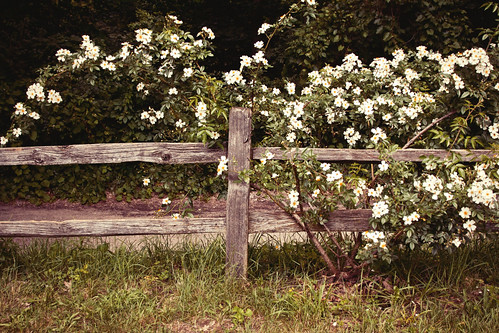 Arb Flower Fence