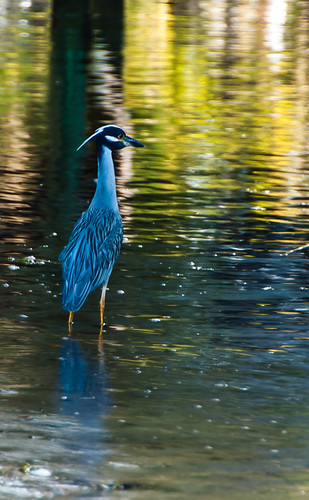 sunset reflection heron water yellow night nikon bubbles crowned d80 tammydialgray
