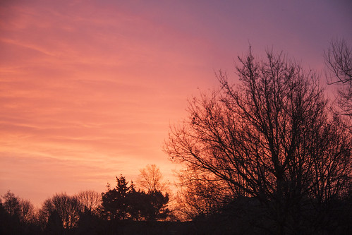 morning trees red sky sunrise knowle knowlepark jobsclose