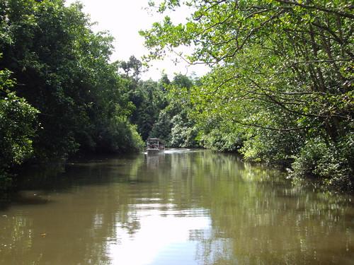Daintree River. Reflections and crocodiles.