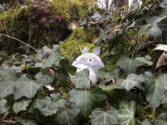 Totoro's Lair