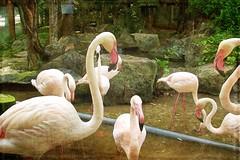 swan(0.0), animal(1.0), zoo(1.0), fauna(1.0), flamingo(1.0), bird(1.0), wildlife(1.0),