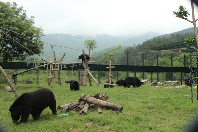 A day in the life of bears at VBRC