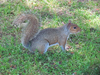 SQUIRREL! at Green Lake