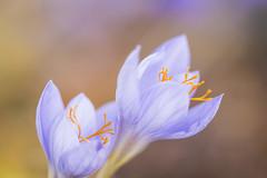 20161024_F0001: Flower macro in the garden