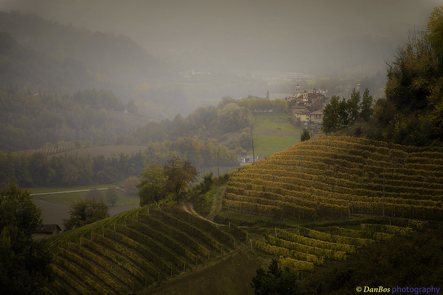 Langhe (Piedmont - Italy) in Autumn