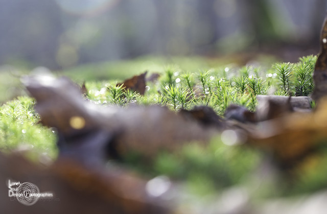 Autumn Light, Canon EOS 5D MARK III, Canon EF 100mm f/2.8L Macro IS USM