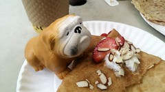 St. George bulldog eating a crepe at Cape Papillon…