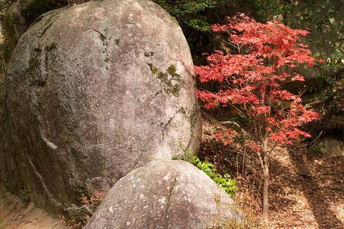 【写真】2012 紅葉 : 笠置山もみじ公園/2020-05-28/IMGP6124