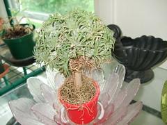 Till tree