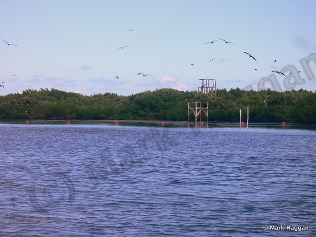 The Frigate Bird Sanctuary on Barbuda