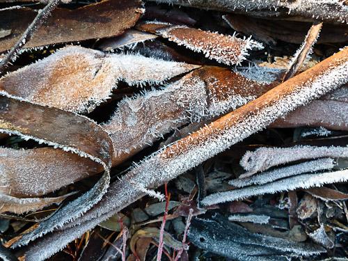 frosty bark