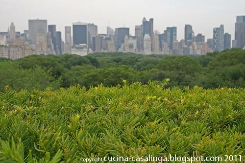 Central Park Met