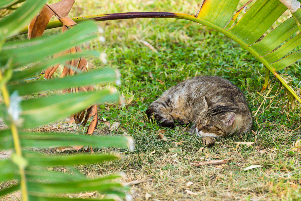 2013-Spain-Benidorm-CatsParadise-005