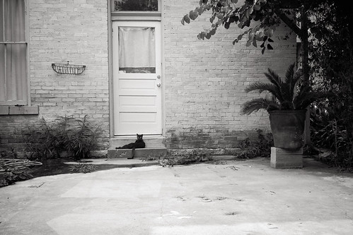 """Le Noir Chat"" by Jesse Acosta"