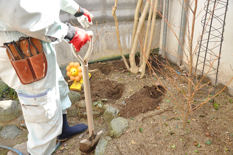 庭木に肥料をやる手順1,穴掘り