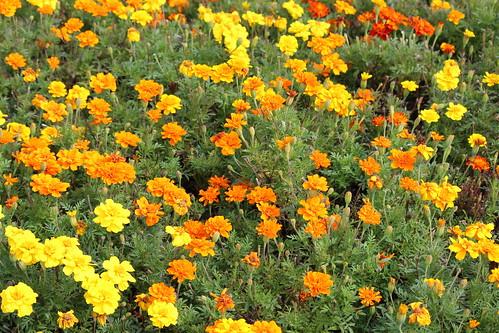IMG_1590_At_Leila_Arboretum