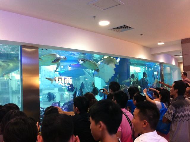 Chinos cargados con móviles y cámaras se amontonan ante un acuario en el Granview Mall de Guangzhou.