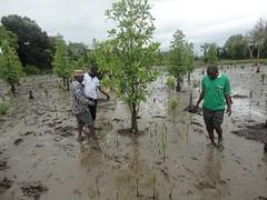 (l-r) Jumanne Kikumbi, the chairman of Langoni village; Hamza Sadiki, an official from Pangani Basin Water Board; and Joseph Mwaimu walk on a muddy section of a dried Pangani River bed. Credit: Kizito Makoye/IPS