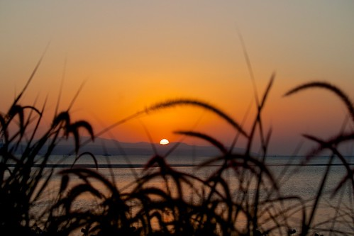 ocean sunset orange grass