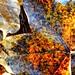 Blatt - Baum - Herbst