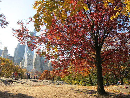 Fall colors in Central Park