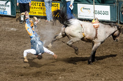 animal sports, rodeo, event, equestrian sport, sports, charreada,