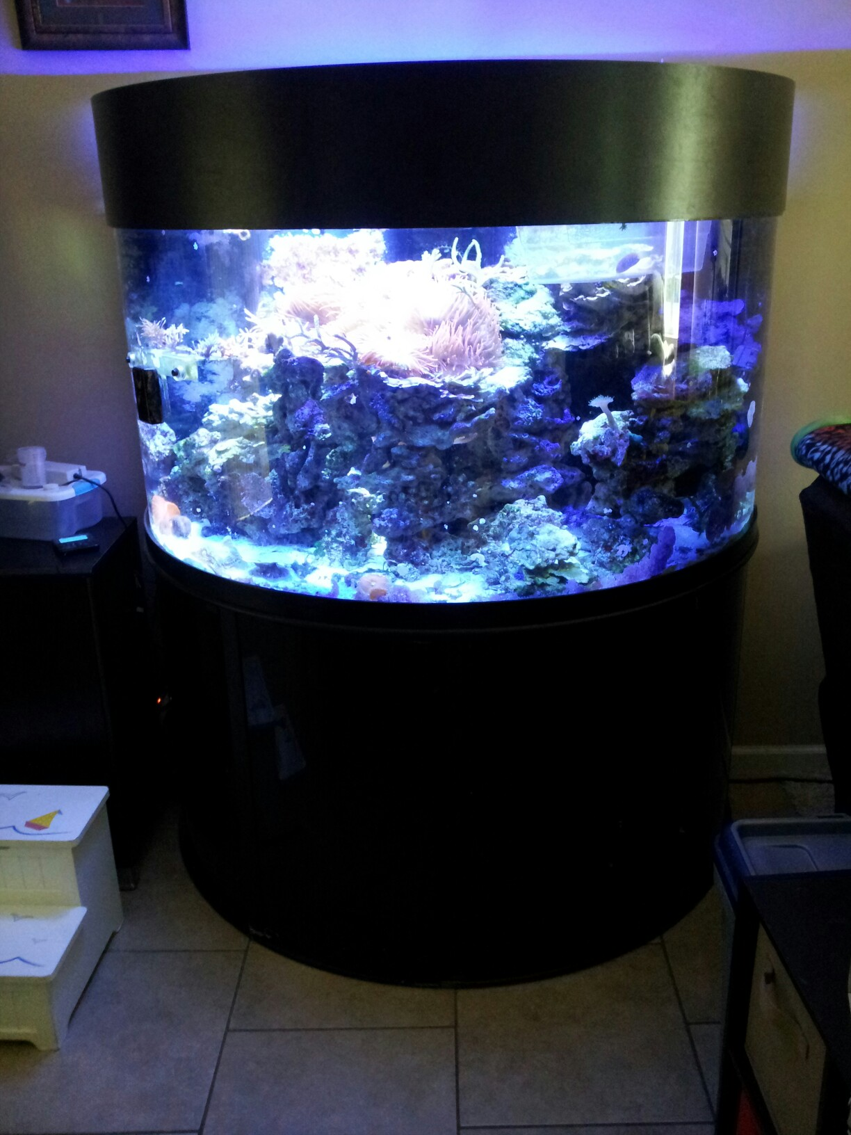 144 gallon half cylinder setup for sale reef central for Cylindrical fish tank