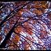 autumn in kashmir by Farhan.khan 9