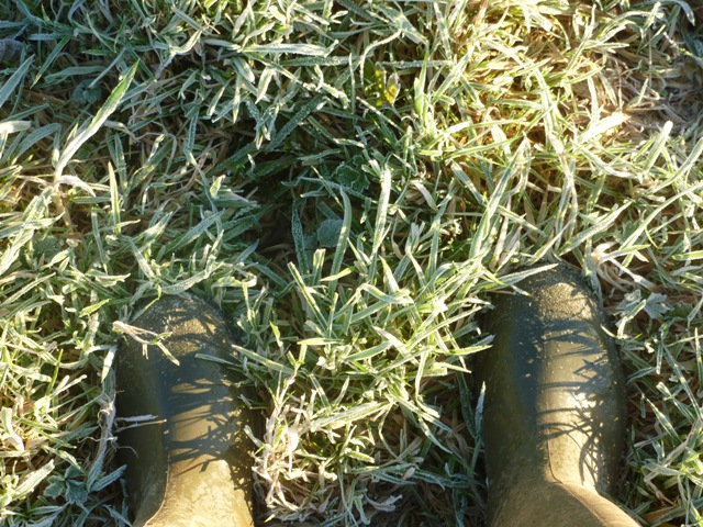 crunching on the frosty ground