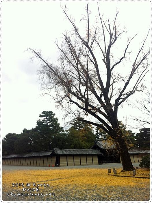御苑銀杏 (6).jpg