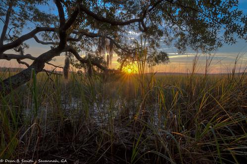 sunset tree nature water night georgia outdoors wildlife savannah hdr blinkagain