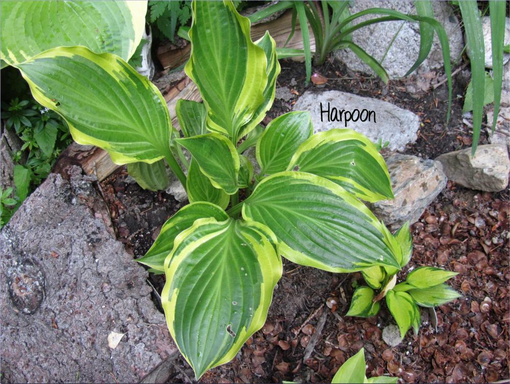 Harpoon 6-9-13 (63)