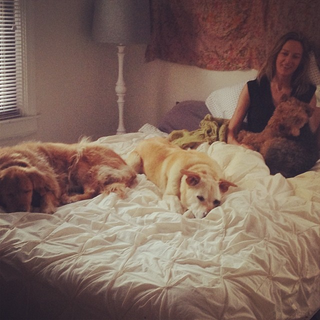 The dogs have decided to create a SNUGGERY on Noelle's bed. Good morning!