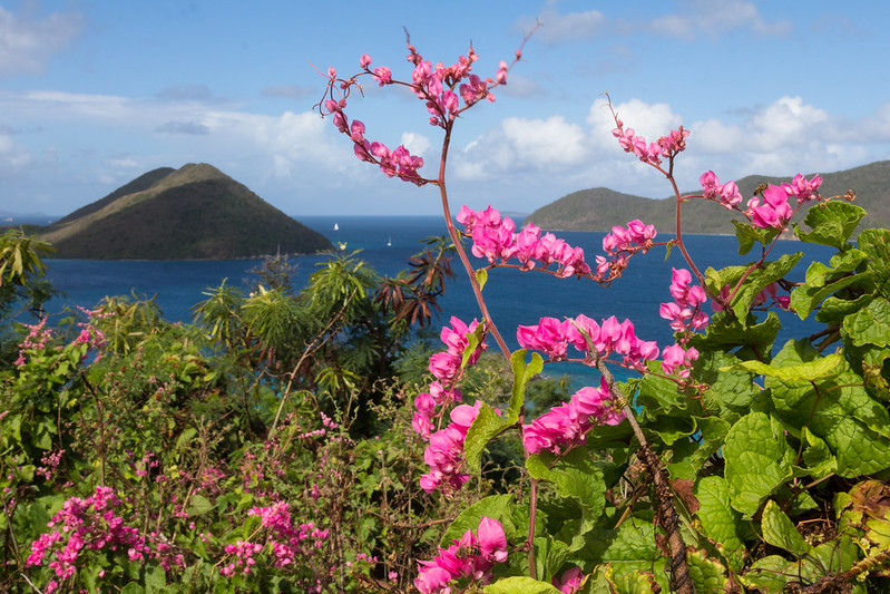 Caribbean hiking views