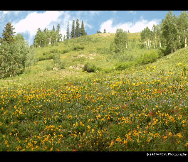 Flowery Meadow