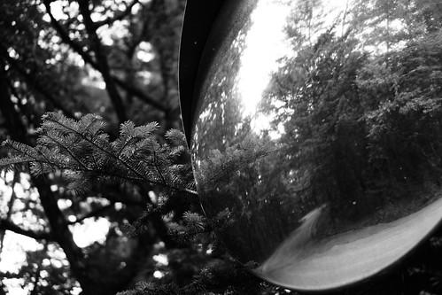 Forest&Mirror